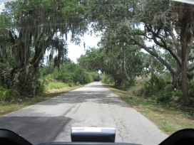 The old oaks covered with Spanish moss line many of the back roads on this ride.
